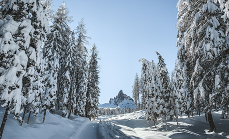 Path in the snow-covered forest of Cortina d'ampezzo